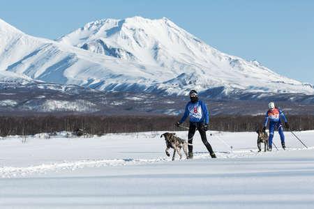 mushing: PETROPAVLOVSK-KAMCHATSKY, KAMCHATKA PENINSULA, RUSSIA - DECEMBER 10, 2016: Skijoring - competition for Cup of Kamchatka Region on background of beautiful Kozelsky Volcano.