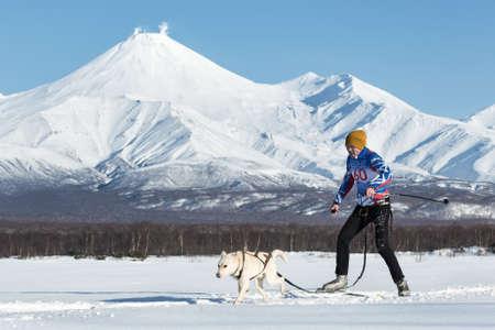 PETROPAVLOVSK, KAMCHATKA, RUSSIA - DEC 10, 2016: Skijoring - competition for Cup of Kamchatka Region on background of Avacha Volcano. Skier-racer Tishkin Vitaly, sled dog Alaskan husky nicknamed King. Editorial