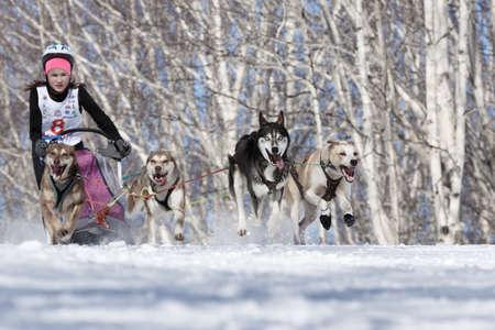 PETROPAVLOVSK-KAMCHATSKY, KAMCHATKA PENINSULA, RUSSIA - FEBRUARY 23, 2017: Kamchatka Kids Competitions Sled Dog Race Dyulin (Beringia). Runs dog sled young Kamchatka musher Krivogornitsyna Christina. Redactioneel