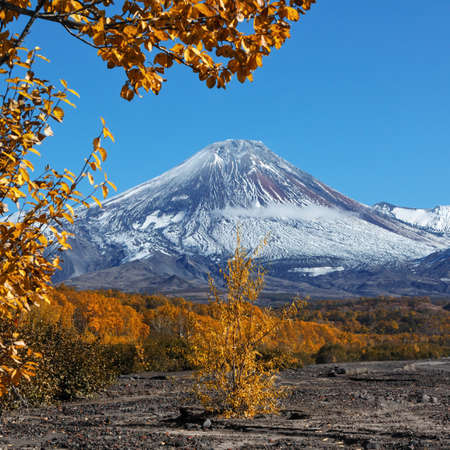 Beautiful autumn landscape of Kamchatka Peninsula: Dry River and colorful autumnal forest at foot of active Avachinsky Volcano (Avacha Volcano) on sunny day. Asia, Russian Far East, Kamchatka Region.