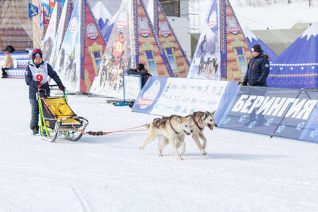 Male child mushing sled dog team, running on snowy race distance during Kamchatka Kids Competitions Sled Dog Race Dyulin (Beringia). Petropavlovsk City, Kamchatka Peninsula, Russia - March 1, 2018.