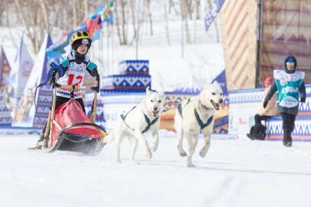 Female child mushing sled dog team, running on snowy race distance during Kamchatka Kids Competitions Sled Dog Racing Dyulin (Beringia). Petropavlovsk City, Kamchatka Peninsula, Russia - March 1, 2018