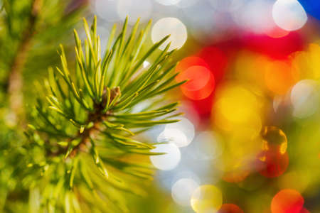 Close-up of Christmas pine tree branch with needles. Xmas ornament decorations for Happy New Year. Selective soft focus on foreground. Lens flare photo effect, holiday blurry bubble bokeh background. Stockfoto - 161218127