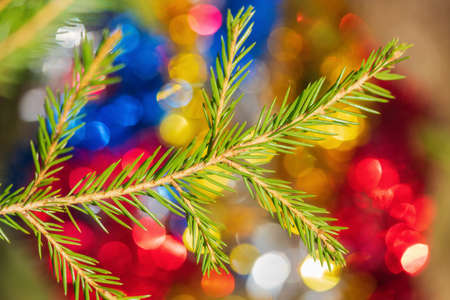 Close-up view of evergreen Christmas pine tree branch with needles on background colorful blurred bokeh festive Xmas ornament for celebration Happy New Year. Selective soft focus on foreground. Stockfoto - 161218128