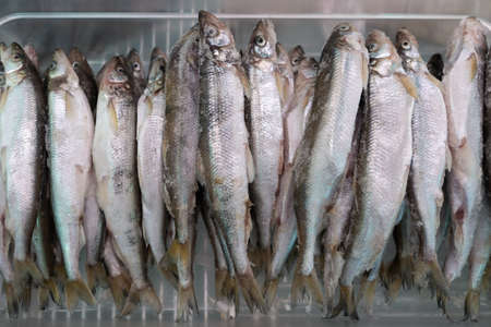 Lot of frozen smelt fish with silver scales in freezer at seafood market. Close-up flat view. Concept: healthy eating, delicious, seafood market, Asian cuisine.