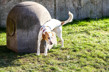 whizz: A dog urinating on a  Park