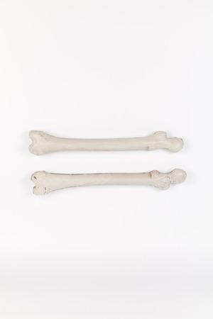 orthopedics bone isolated on white background
