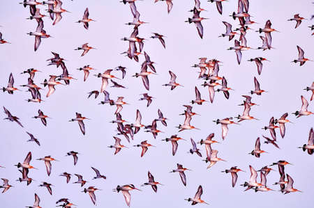 immensely: Many birds in the sky