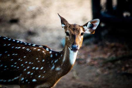 goodly: Deer