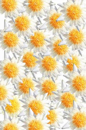 lotus flowers set Stock Photo