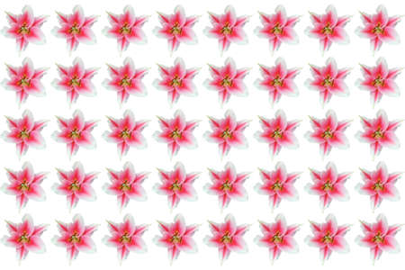 lily wallpaper floral pattern  Stock Photo