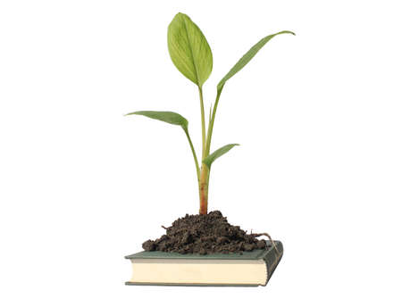 tree and book isolated