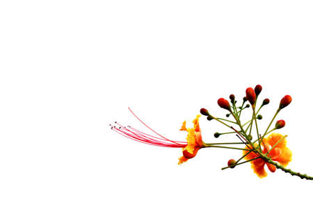 flower on isolated background photo