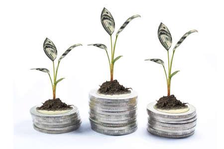 tree money coin on white background Stock Photo - 15897959