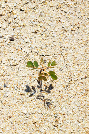 tree on dry soil 3 photo
