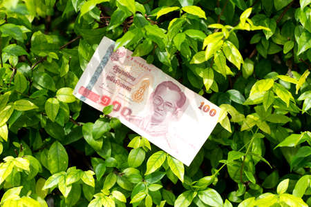 money of thailand 100 baht on green tree background Stock Photo - 16562285