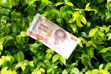 money of thailand 100 baht on green tree background Stock Photo - 16562285