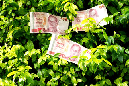 thai banknote 100 baht on green background Stock Photo - 16562286