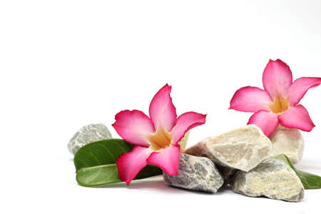 stones and pink flower on the white  photo