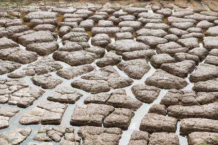 fissures: Drought breaks ground fissures of the ground   Stock Photo