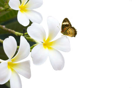 Flower and butterfly on white background