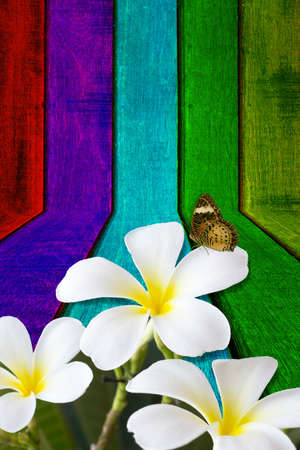 flower and butterfly on wooden background