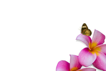 villus: flower and butterfly on white background