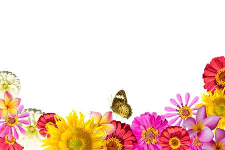 borde de flores: mezclar marco de las flores