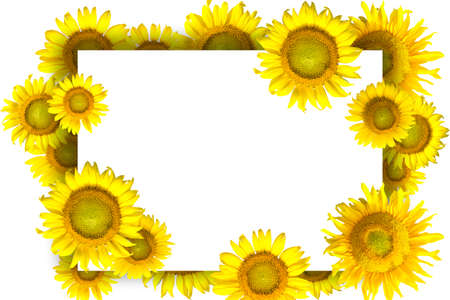 Border with sunflowers. Isolated on white background Stock Photo