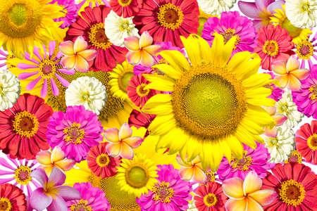 mix flowers frame isolated white background