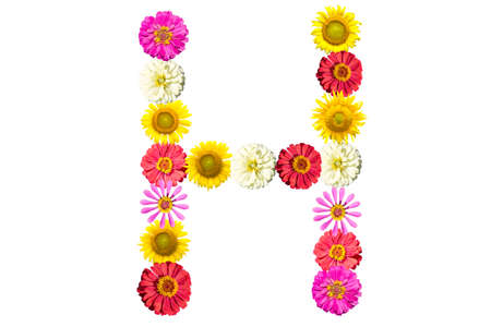 Letter H - flower isolated on white background, font Stock Photo