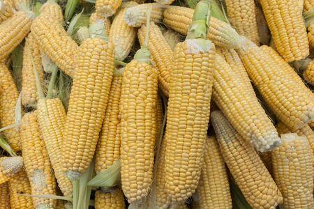 shucked: Corn closeup in open market under sunlight  Stock Photo