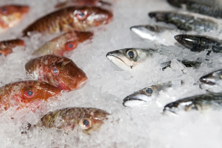 Fresh fishes on ice in open market photo