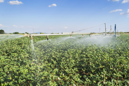 irrigation system over a ripe cotton field photo