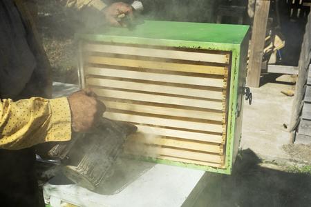 sprayed: Beekeeper sprayed with smoke honeycombs Stock Photo