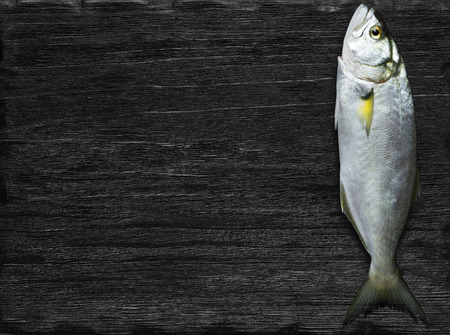 bluefish: Raw fish bluefish over black background