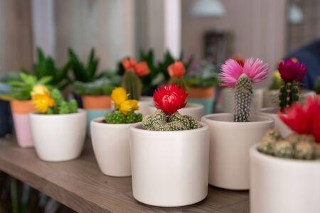 Beautiful cactus at the florist shop Фото со стока