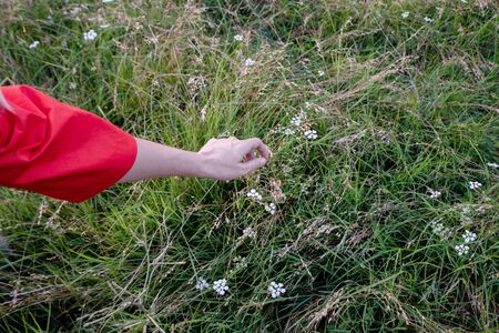 Womans hand touching the grass at the field Фото со стока