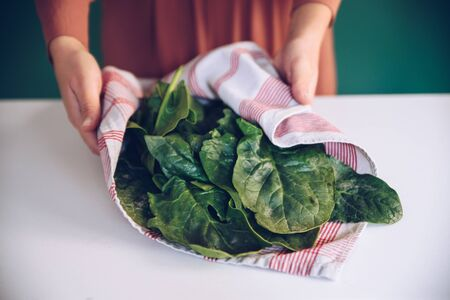 Woman holding spinach leaves in a towel Stok Fotoğraf