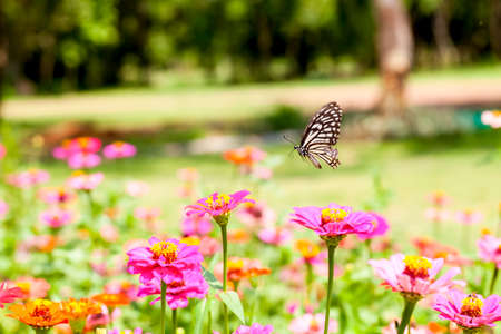 arthropoda: Butterfly designs are for nectar on flower color in the morning one day. Stock Photo