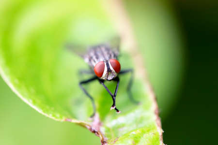 debugging: Fly is an insect-borne illnesses because we disdain species.