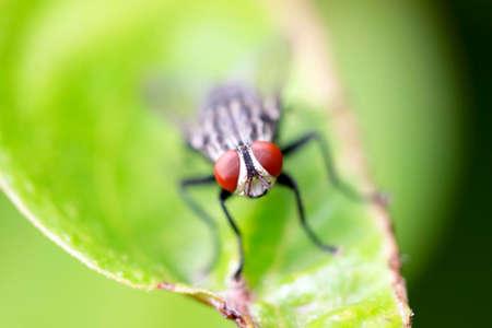 disdain: Fly es una las enfermedades transmitidas por insectos, ya que desde�amos especies.