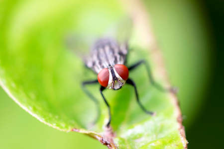 disdain: Fly is an insect-borne illnesses because we disdain species.