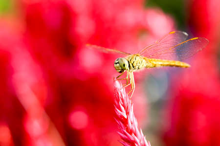strains: Dragonflies are beautiful creatures, and there are many strains.