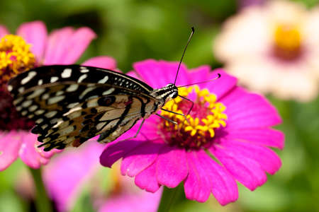 inachis: Butterflies and flowers amid sunny autumn morning. Stock Photo