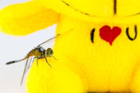 animal vein: Single Blue dragonfly on yellow stuffed background Stock Photo