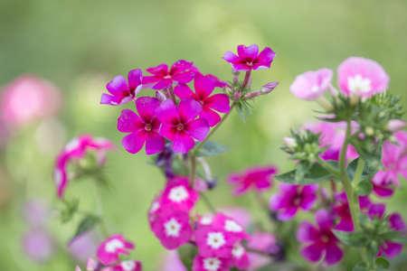 夏の日に庭の花を咲かせて。