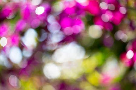 庭で美しいマルチ色ボケ。春の背景。 写真素材