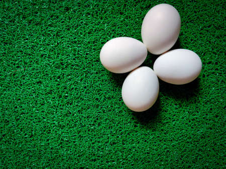 Four uncooked eggs are isolated on green background. Daylight