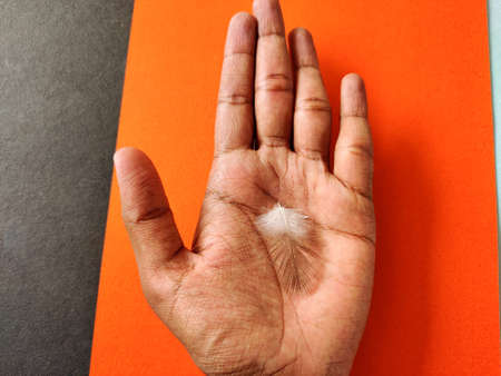 One pigeon feather in human hand. Isolated on orange and black background. Business concept